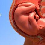 39-неделя-беременности